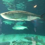 Photo of Mote Marine Laboratory and Aquarium