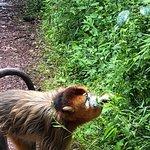 ภาพถ่ายของ Shennongding National Nature Reserve