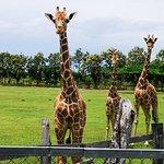 Foto van Ponderosa Adventure Park
