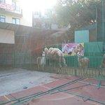Photo of Zoo in Sochi