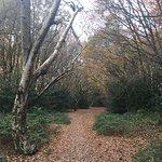 漢普斯特德公園照片