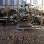 Foto de Museo di Storia Naturale dell'Accademia dei Fisiocritici