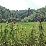 ภาพถ่ายของ Bamboo Tours