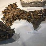 ภาพถ่ายของ พิพิธภัณฑ์เมลเบิร์น