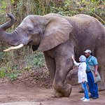 Elephant Handler Trinity with a guest interacting with Kitso.