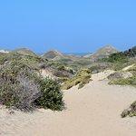 Foto de Ano Nuevo State Reserve