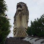 ภาพถ่ายของ สิงโตทะเล เซ็นโตซ่า