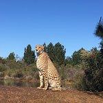 Tenikwa Wildlife Awareness Centre Photo