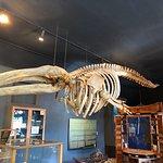 Foto de The Whale Museum