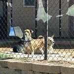 Best Friends Animal Sanctuary照片