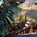 Gorgeous leafy views from the treehouse at Kembu