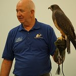 Swainson's Hawk at the live bird presentation