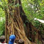 Gumbo Limbo Nature Center照片