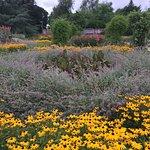 Staunton Park Foto