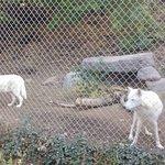 Utah's Hogle Zoo의 사진