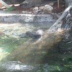 Otters behind plexiglass