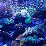 Foto di Tennessee Aquarium