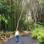 Φωτογραφία: Bamboo Land Nursery & Parklands