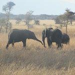 Foto de Safari Kenya Tanzania