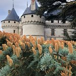 Φωτογραφία: Domain of Chaumont-sur-Loire