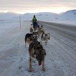dog cart trip in Adventdalen