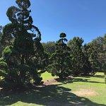 The Pearl Fryar Topiary Garden