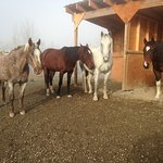 4 of my horses resting after breakfast on a foggy fall mornin, What color would you like to ride