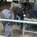 Photo of Corfu Donkey Rescue