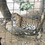 ภาพถ่ายของ Safari Zoological Park