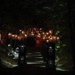 Foto Foresta Lumina