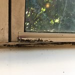 Mold on a window in the conference room