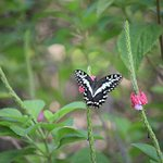 a butterfly on the campinglawn