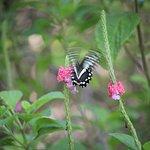tha butterfly again