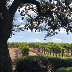 Grapeline Wine Tours Santa Barbara의 사진
