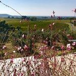 Azienda Agricola Michele Satta fényképe