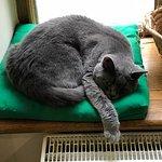 Cat Cafe Photo
