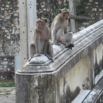 Monkeys at the entrance