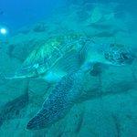 Foto di Travel Sub Dive Center