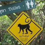 Monkey warning