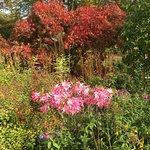 Foto Green Island Gardens