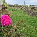 Bild från Bramon Wine Estate