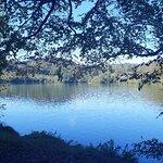 Foto de Castlewellan Forest Park
