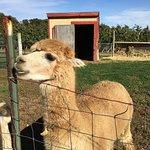 Foto de Tougas Family Farm