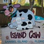 The Island Cowの写真