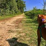 trail with doggo