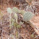 Фотография Palo Duro Canyon State Park