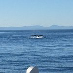 Prince of Whales Whale Watching의 사진