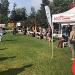 A Dog Show exclusively dedicated to Lagotto Romagnolo breed. Bagno di Romagna, 10/13/2018.