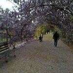 Adelaide Botanic Garden resmi