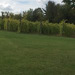 Foto de Shelburne Vineyard